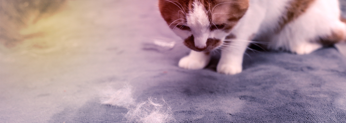 Car Hack: Remove pet hair from your car easily