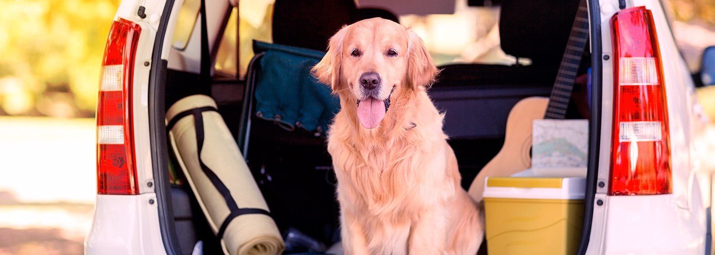 8 tips for pet-friendly travel